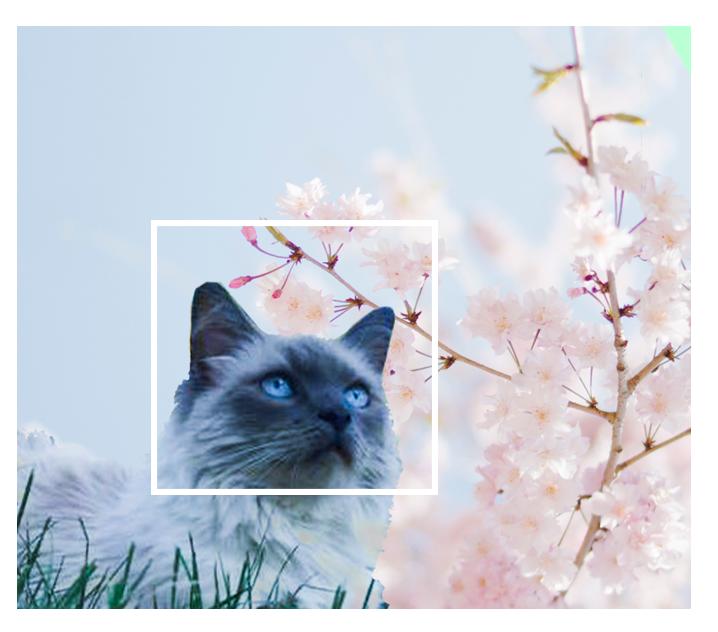 Kat uitvaart venlo