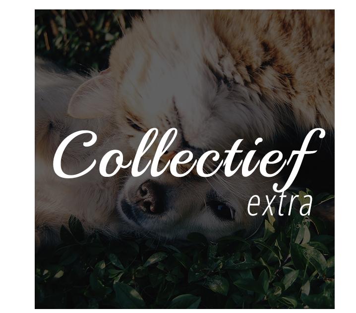 collectief extra dierenuitvaartcentrum Venlo